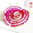 3D Pop Up Card Flower Beauty Mothers Day Greeting Gift New Happy Cards