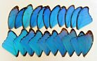 20 PIECES ASSORTED BLUE MORPHO BUTTERFLY WINGS WHOLESALE LOT JEWELRY ARTWORK