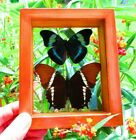 2 REAL FRAMED BUTTERFLY MOUNTED DOUBLE GLASS AMAZING BUTTERFLIES