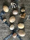 Lot of 21 Hermit Crab Shells Large Medium