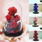 Eternal Preserved Rose With Glass Domes Decorative Resin Flower Roses Gift Ideas