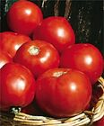 100 Seeds Tomato Basket Vee TOMATO SEEDS Bush Tomato
