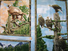 Majestic Wings Eagle Hawk By Rod Frederick 24x44inches panel