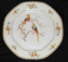 6 ALTROHLAU Czechoslovakia 6 EDEN DINNER PLATE 9 1/2 inches && FREE SHIPPING