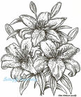 Stargazer Lilies Flowers Wood Mounted Rubber Stamp NORTHWOODS P7352