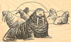 Beach Walrus Walruses Wood Mounted Rubber Stamp IMPRESSION OBSESSION E1631 New