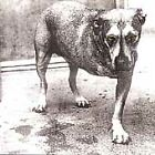 Alice in Chains : Alice in Chains Alternative Rock 1 Disc CD