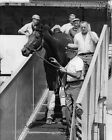 Great American Racehorse DR FAGER Glossy 8x10 Photo Print Thoroughbred Poster