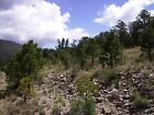 TIMBERON NEW MEXICO LAND FOR SALE 13 ONE HALF ACRE TRACTS