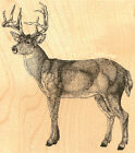 Whitetail Deer Wildlife Wood Mounted Rubber Stamp Impression Obsession J7010 New