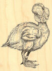 Just Ducky Easter DUCK Wood Mounted Rubber Stamp IMPRESSION OBSESSION F7039 New