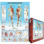 The Human Body Jigsaw Puzzle, 1000 pieces Eurographics. Free Delivery