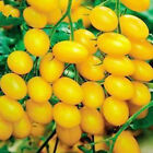 nonotou 20pcs Yellow Cherry Tomatoes Home Fruit Seed DIY Garden