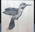 Detailed HUMMINGBIRD Stampabilities Wood mount Rubber Stamp BRAND NEW GR1100