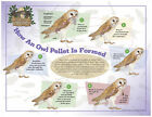 Laminated Poster 24x18 How An Owl Pellet Is Formed