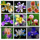IRIS SEED MIX Pacific Coast Iris Flowers Seeds 100 SEED