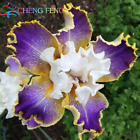 Iris Seeds Popular Perennial Garden Flower Gorgeous WHITE BLUE ORCHID 50 SEED