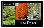 New England Postcard Images Trees Spring Fall Winter Snow Orange L