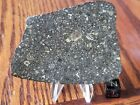 NWA 2900 400g Carbonaceous CV3 chondrite Meteorite full polished slice