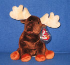 TY ZEUS the MOOSE BEANIE BABY - MINT with MINT TAGS