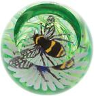 Caithness Glass paperweight Bee on a Flower Busy Bees