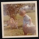 Vintage Photograph Adorable Little Girl with Three Cats Kittens in Backyard