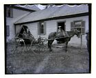 3 Glass Negatives Dublin NH Lot Woman with Horse  Buggy  Horse Foal c1900