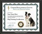 Dog Training Certificate Diploma Trainer Behavior Obedience Lessons Course
