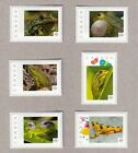 FROGS  Set of 6  Picture Postage stamps MNH Canada 2016 p16 02 2fr6