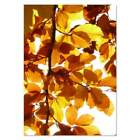 Autumn Leaves Wall Posters Prints PP066010