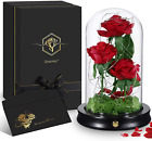 Unomor Rose Gift For ValentineS Day 4 Light Modes Red Rose In Glass Dome With
