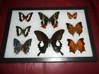 8 real mounted butterflies framed 8x12  riker mount collection 3