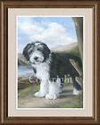 BEARDED COLLIE Young Beardie fine art print by Lynn Paterson