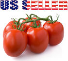 30+ ORGANICALLY GROWN Roma Tomato Seeds Heirloom NON-GMO Italian Sweet From USA