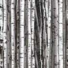 Grey Brown Birch Trees  By The yard On the Wild Side collection by Kanvas Studio