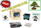 Complete Seed Starter Kit Indoor Chinese Juniper Bonsai Tree Fun By Eves NEW