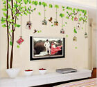 New Family Photo Picture Frame Tree Wall Sticker home Decor Mural Jungle decal