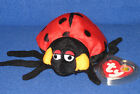 TY COUNTESS the LADYBUG BEANIE BABY - MINT with MINT TAG - RETIRED BBOM
