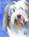Bearded Collie Dog 11x14 signed art PRINT RJK painting