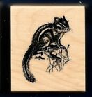 CHIPMUNK NATURE Wildlife Forest Animal realistic small Craft NEW RUBBER STAMP