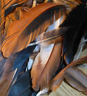 10 Unique Natural Color Rooster Tail and Wing Feathers Cinnamon Queen