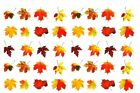 20 Autumn Fall Leaves Nail Art Waterslide Decals Adult or Child you pick