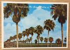 Postcard Rio Grande Valley Texas Palm Trees TX FREE SHIPPING