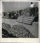 1947 Press Photo Farmers Placing Sugar Beets into Concrete Canal, Italy