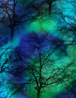 Northern Lights Black Trees Cotton Quilt Fabric by Timeless Treasures