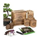 Bonsai Tree Seed Starter Kit Mini Bonsai Plant Growing Kit 4 Types of Seed