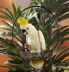 Cockatoo Statue on Ring Perch Colorful Tropical Tiki Luau Beach Decor #8225