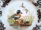 4PC Set - Spode Woodland Birds *BLUE WINGED TEAL* DINNER Plates Brown/White NWT