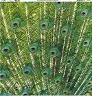Sugar Tree Peacock Feathers Scrapbooking Paper