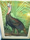 The Wild Turkey Etching Hand Colored with Water Colors Signed Artist John Costin